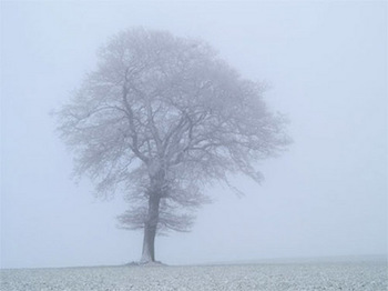 What Is Freezing Fog?